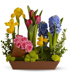 Spring Favorites from Arjuna Florist in Brockport, NY