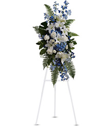 Ocean Breeze Spray from Arjuna Florist in Brockport, NY