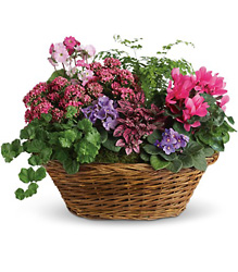 Simply Chic Mixed Plant Basket from Arjuna Florist in Brockport, NY