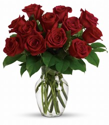 Enduring Passion - 12 Red Roses from Arjuna Florist in Brockport, NY