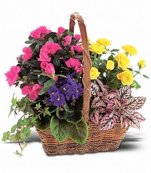 Blooming Garden Basket from Arjuna Florist in Brockport, NY