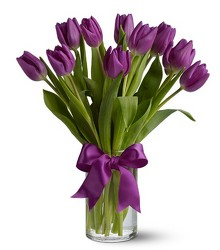 Passionate Purple Tulips from Arjuna Florist in Brockport, NY