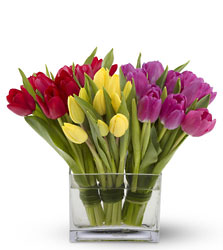 Tulips Together from Arjuna Florist in Brockport, NY