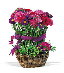 Basket of Smiles from Arjuna Florist in Brockport, NY