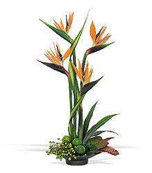 Bird of Paradise from Arjuna Florist in Brockport, NY