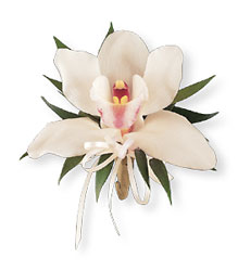 Cymbidium Orchid Corsage from Arjuna Florist in Brockport, NY