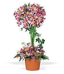 Alstroemeria Topiary from Arjuna Florist in Brockport, NY